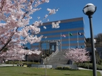 city_hall_cherry_blossoms_0300