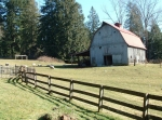 sammamish-barn-sheep
