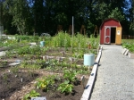 the-giving-garden-at-shorelines-community-garden-fixed